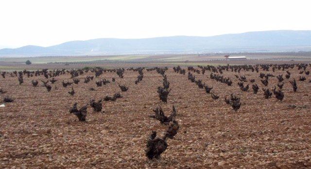 Campo, viña, cosecha, agricultura, cepa, vino