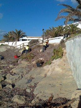 Rehabilitación de espacios naturales en Formentera