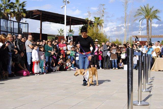 Primer desfile de perros abandonados en Bioparc Valencia para buscar un hogar