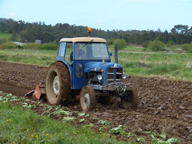 Tractor siembra patatas en el municipio coruñés de Coristanco