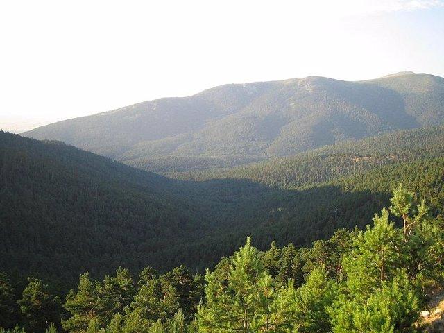 Pinar, monte, montaña, bosque, Guadarrama