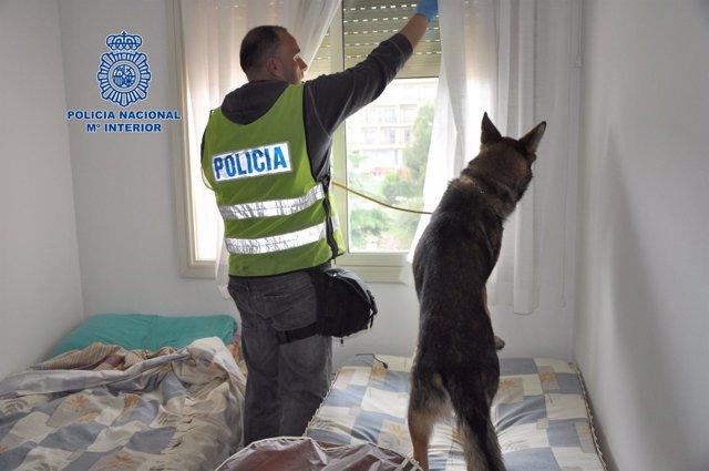 Registro en Lloret por una operación contra narcotráfico