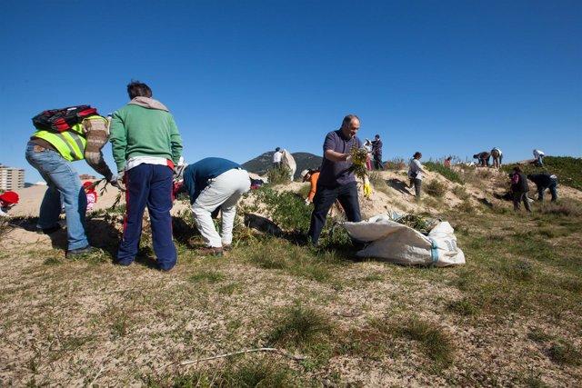Voluntarios ambientales del programa PRVOCOA