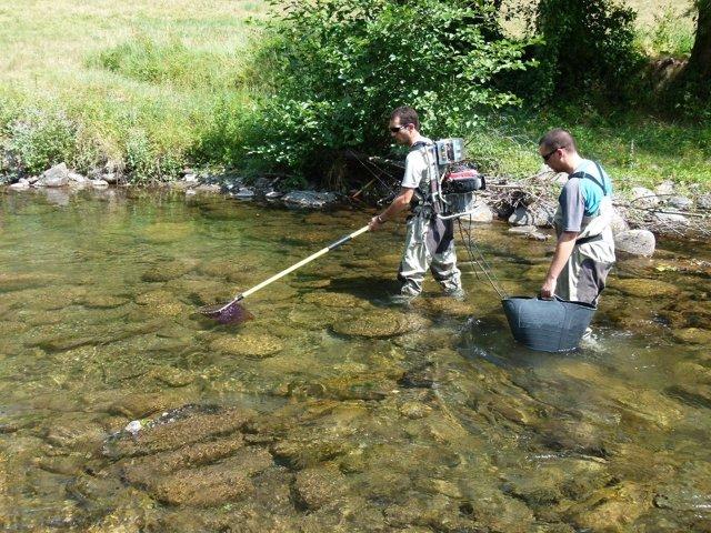 Técnicos practicando pesca eléctrica en un río de Lleida.