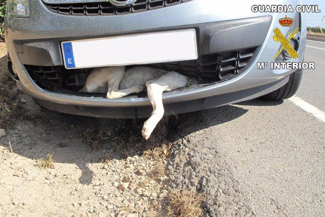 Perro atrapado en el paragolpes de un coche