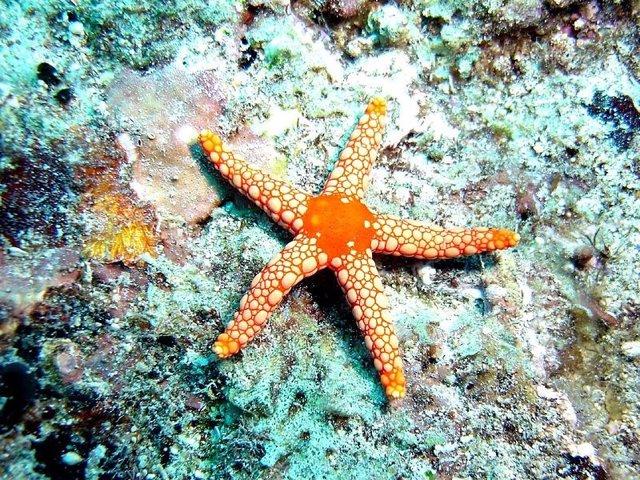 Las estrellas de mar tienen ojos en la punta de sus brazos