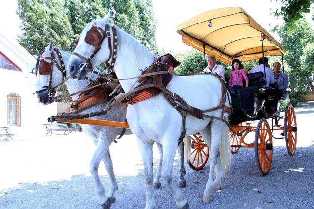 Los turistas podrán visitar en calesa puntos emblemáticos del Valle de Lecrín
