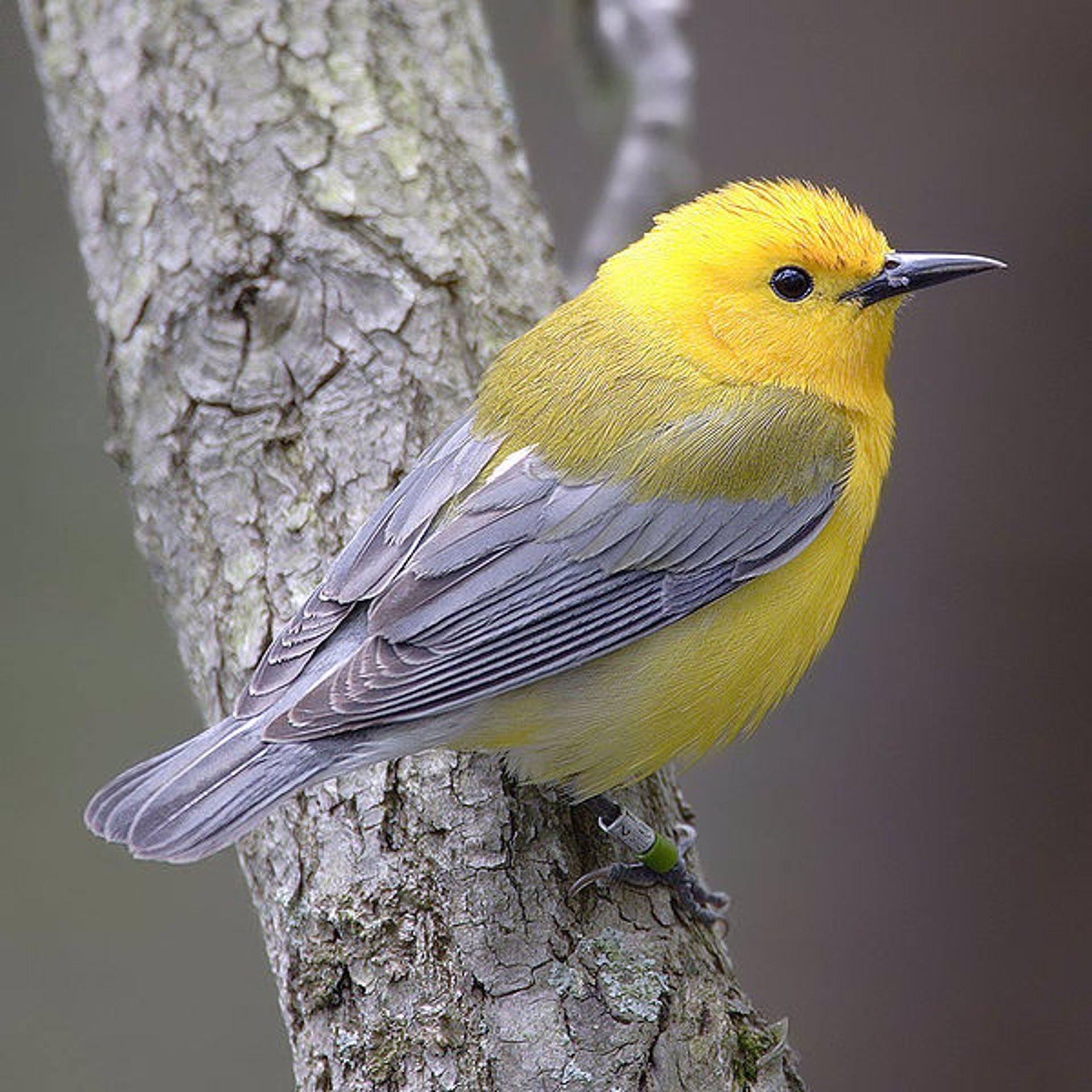 Las aves se adaptan al cambio climático para evitar su extinción