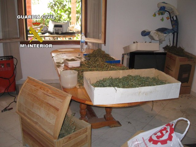 Marihuana incautada en Algaida