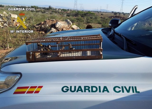 La Guardia Civil denuncia a varios furtivos por captura ilegal de aves