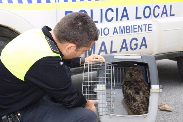 Búho Real Recuperado Por La Policía Local