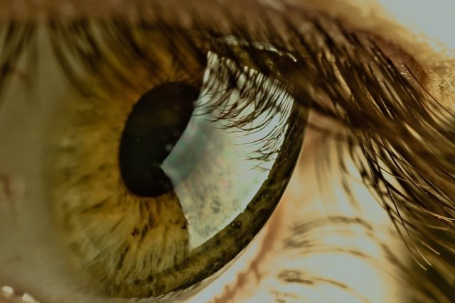 Lentilla, ojo