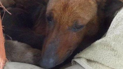 Argentina.- Una perra salvó a un bebé de morir del frió cobijándolo junto a sus cachorros