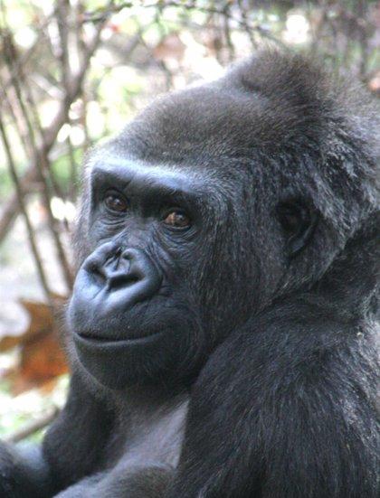 El parque congoleño de Virunga, amenazado por la búsqueda de petróleo