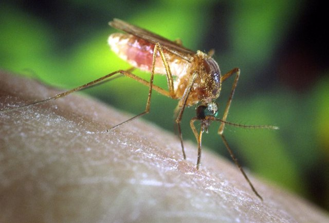 Mosquitol virus del Nilo Occidental