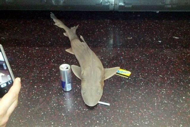 Tiburón en el metro de EEUU
