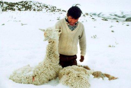 Perú decreta estado de emergencia en 250 distritos por fuertes nevadas