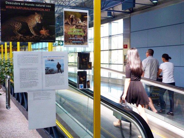 Exposición fotográfica en el aeropuerto de Madrid-Barajas