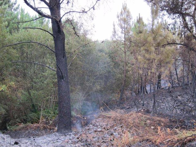 Monte quemado en Ponte Caldelas (Pontevedra)