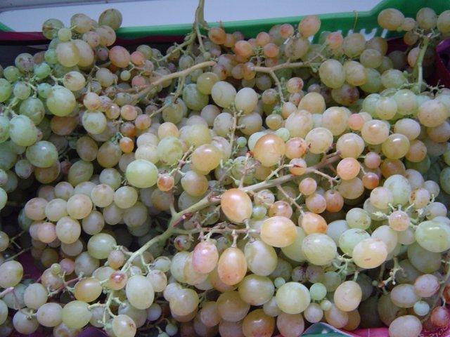 Uva, uvas, vendimia, racimos, fin de año, Nochevieja