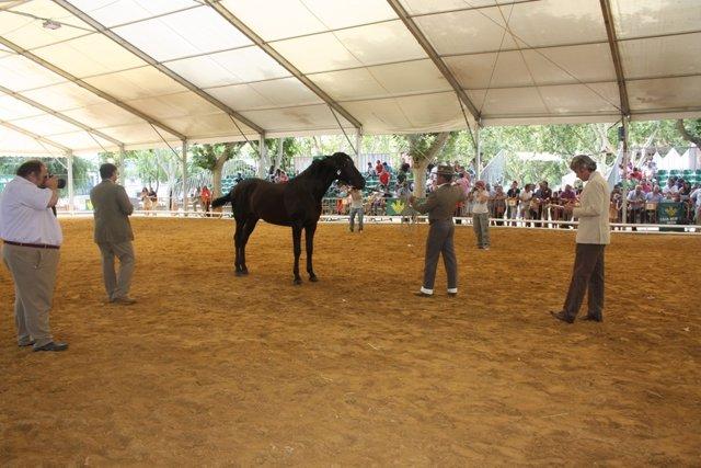 Jueces puntúan uno de los caballos que se dan cita en Anducab 2013.