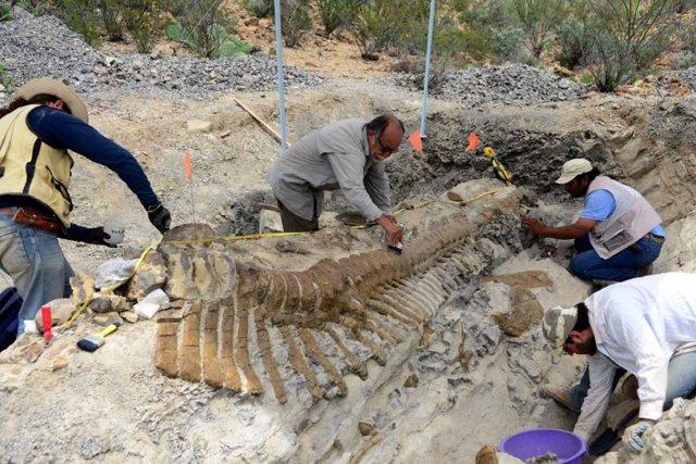 Trabajadores y paleontólogos del Instituto Nacional de Antropología e Historia (