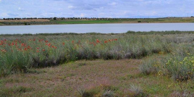 Laguna de Lillo