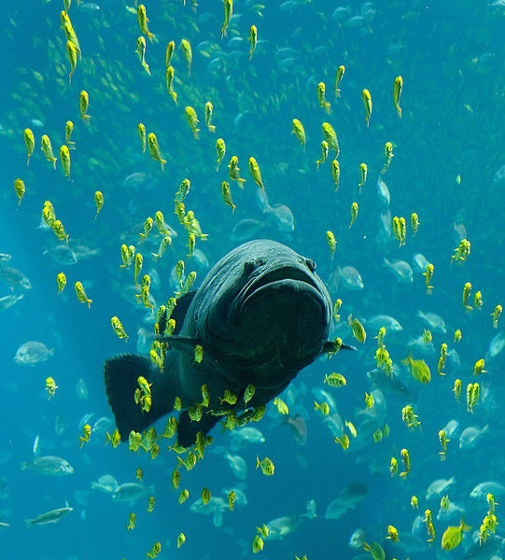 Montes submarinos, cruciales en la predicción del clima