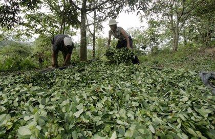 Colombia.- Muere un piloto estadounidense al estrellarse el avión con el que fumigaba cultivos ilegales