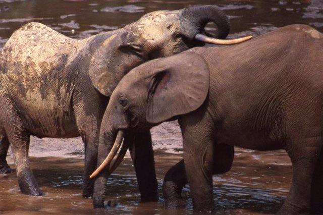 Elefantes, el ocaso de los gigantes, Mejor Película del Ficcad