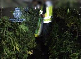 Interceptada en Dos Hermanas (Sevilla) una furgoneta con droga