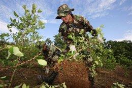 Un soldado boliviano en una plantación ilegal de cocaína
