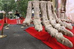 Fósil de Dinosaurio, pie
