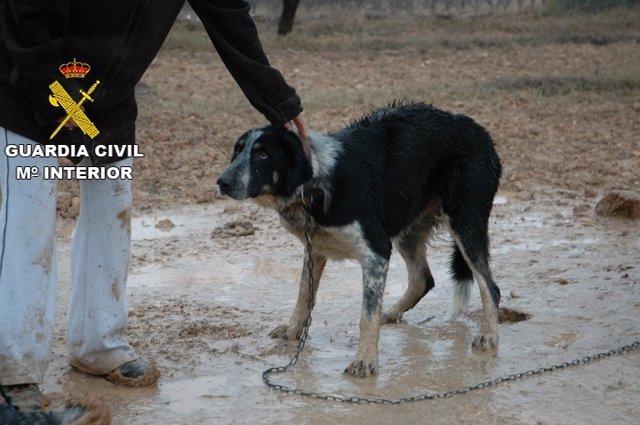 Uno de los perros encontrados en la finca