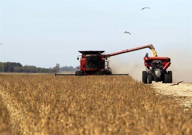trabajos de cosecha de soja en un campo cerca de Chacabuco