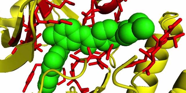 Catálogo de interacciones entre fármacos y proteínas