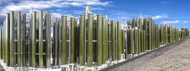Fabricación de plástico a partir de algas