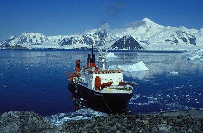 Descubren una abundancia y diversidad inesperada en fiordos subpolares de la Antártida