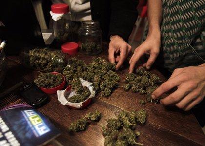 Uruguay.- La Ley de marihuana entraría en vigor este viernes y la venta se retrasa hasta el segundo semestre de 2014