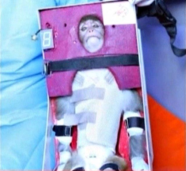 Irán envía con éxito al espacio a un mono por segunda vez