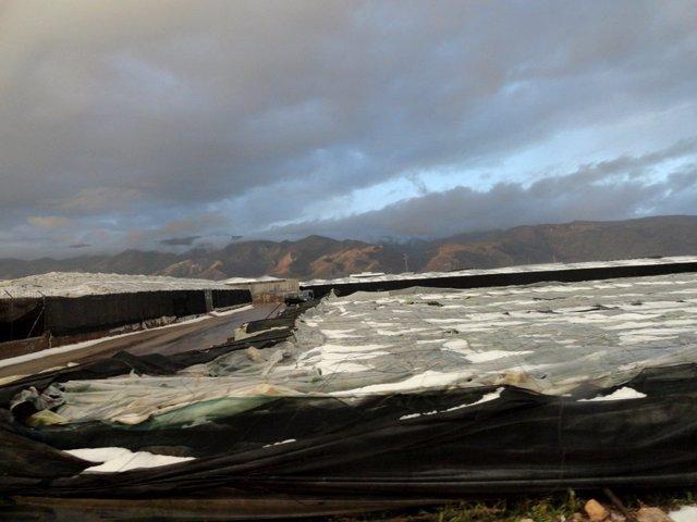 Daños ocasionados en invernaderos por el granizo en El Ejido