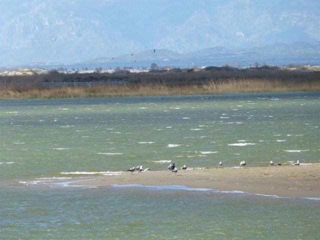 Aves en el Delta del Ebro, Delta de l'Ebre