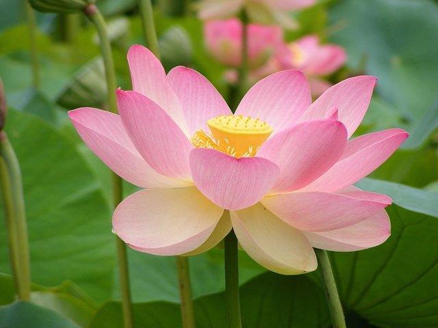 El ancestro de las plantas con flor se desarrolló por duplicación del genoma hace 200 millones de años