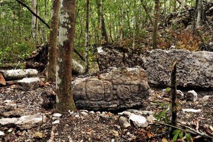 México.- México pierde al año 155.000 hectáreas anuales de bosque desde 2005
