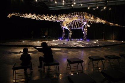 Las plumas eran la excepción y no la regla entre los dinosaurios, según un estudio