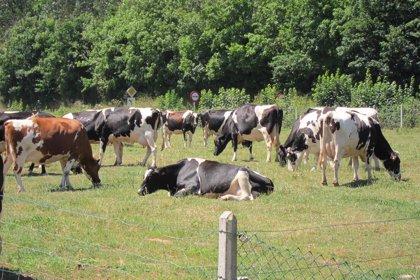 El Principado reclama a Cañete la actividad agraria y creación de empleo como criterios ineludibles en la PAC