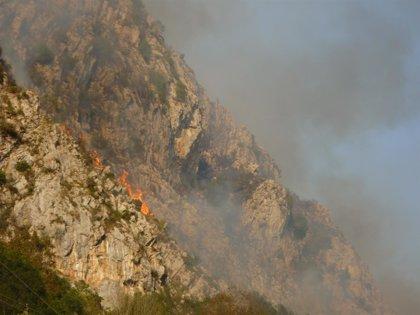 """Ecologistas alertan de la proliferación de incendios en la última semana, la mayor parte """"de origen ganadero"""""""