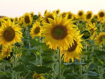 UAGA se movilizará contra la nueva Política Agraria Común