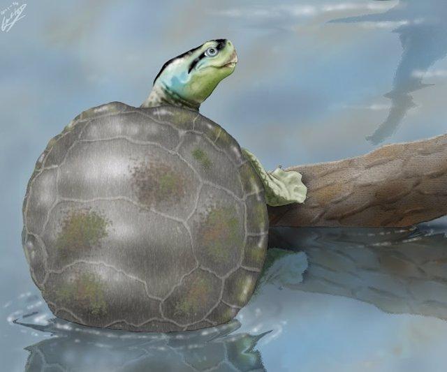 Hallan tortuga única en el Jurásico