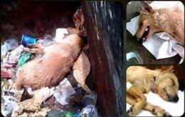 Perro apaleado en Zulia, Venezuela